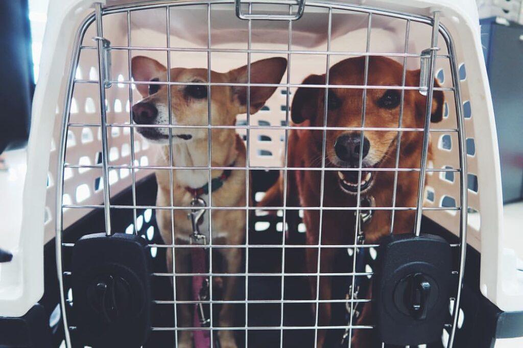 Como morar fora com animal de estimação